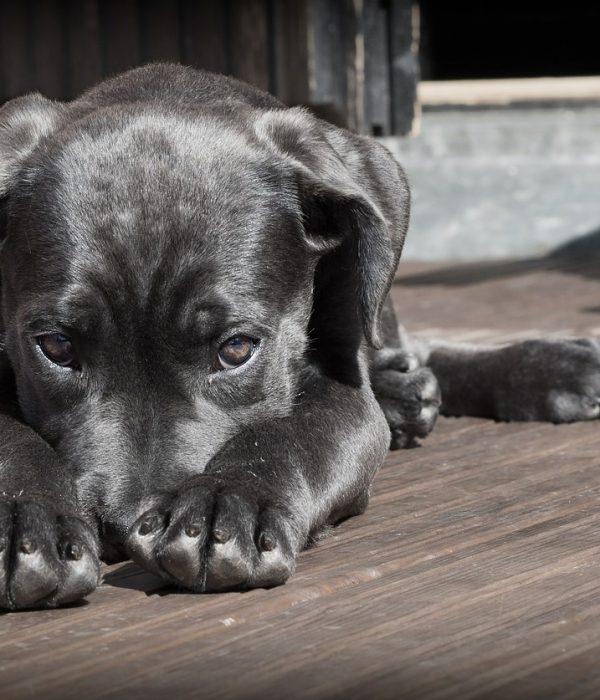 Les parasites internes du chien : symptômes, traitements et préventions