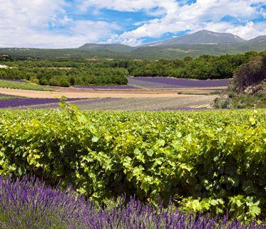 Zoom sur les vins de Provence
